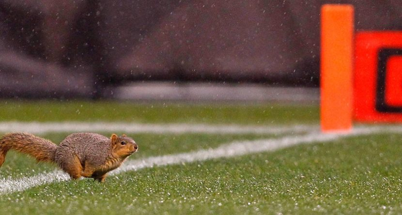 Best Squirrel Moments In Sports History