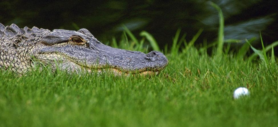 World's 9 Most Dangerous Golf Courses