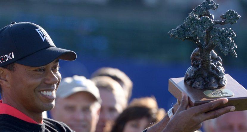Tiger & Torrey: So Happy Together