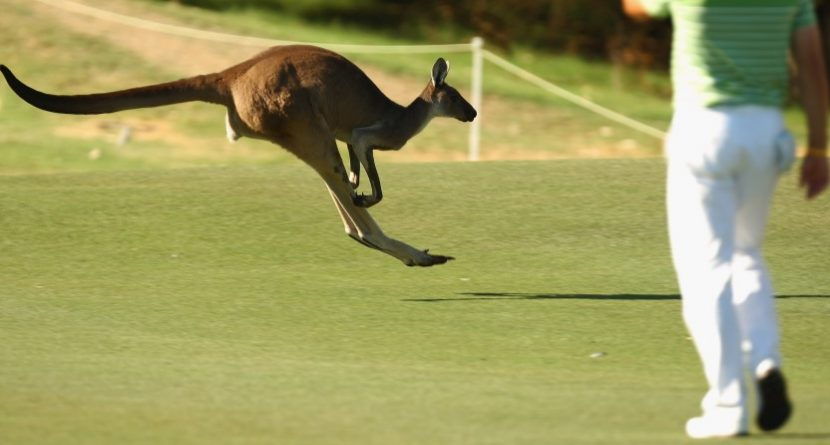 Kangaroo: A Masters Champions Dinner Unlike Any Other?