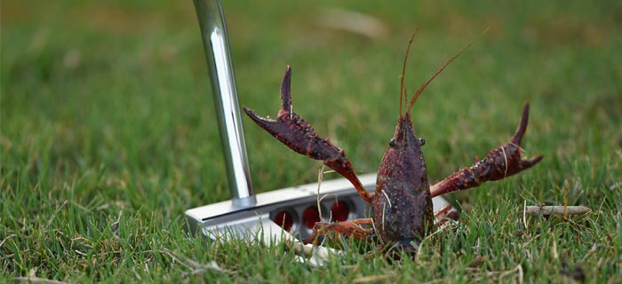 scotty-cameron-crab-crustacean_article