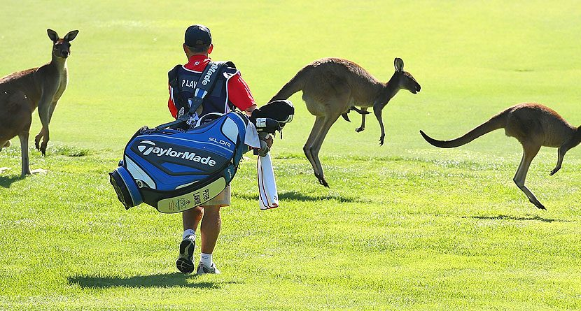 Kangaroo to Lobster: The Masters Champions Dinner