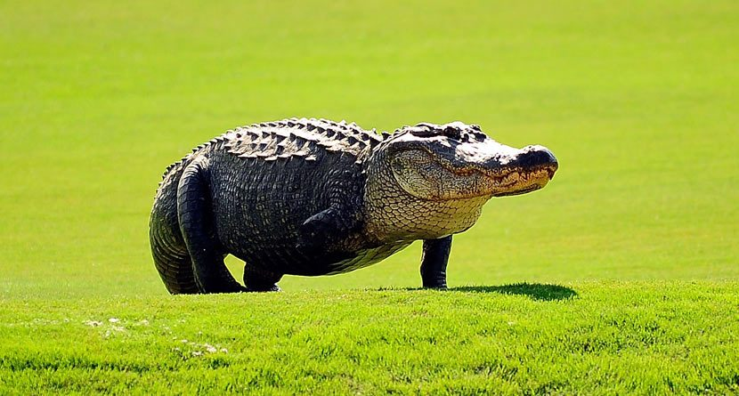 Tripod: TPC Louisiana's Most Famous Resident
