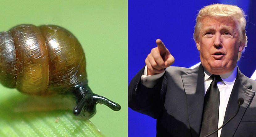Donald Trump vs. Snails: The Battle Rages On… Slowly