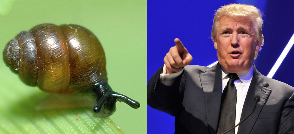 Donald Trump vs. Snails: The Battle Rages On… Slowly