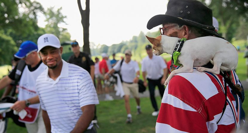 Caption This: Tiger Woods' Four-Legged Fan