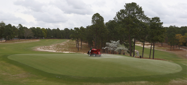 pinehurst-green_article