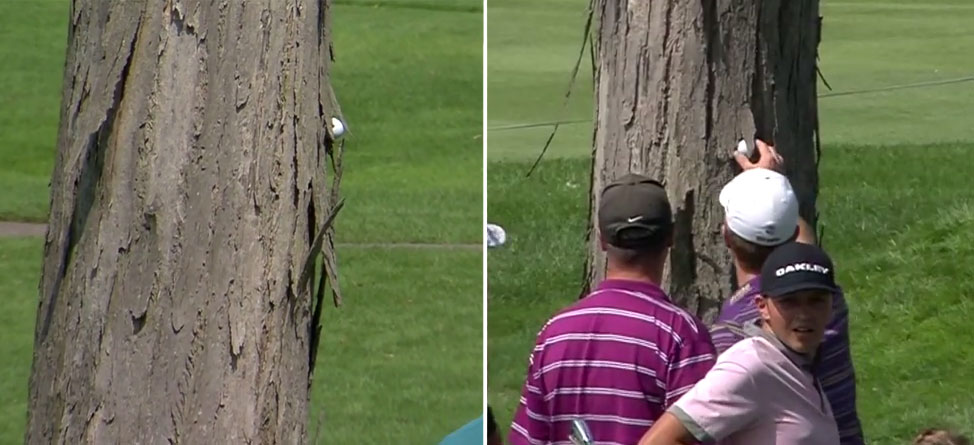 Kevin Streelman's Ball Gets Lodged In A Tree Trunk