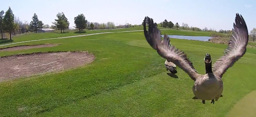 goose-go-pro-drone_anchor