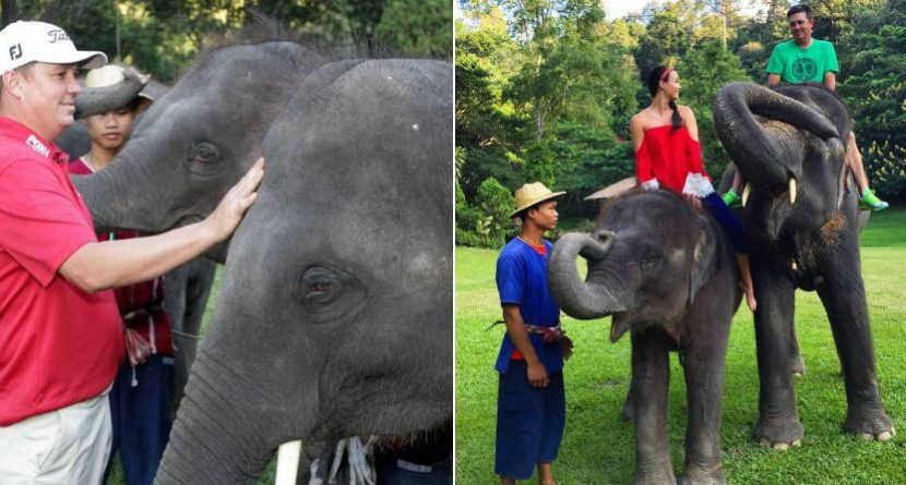 Jason Dufner Is Having A Grand Ol' Time With Elephants