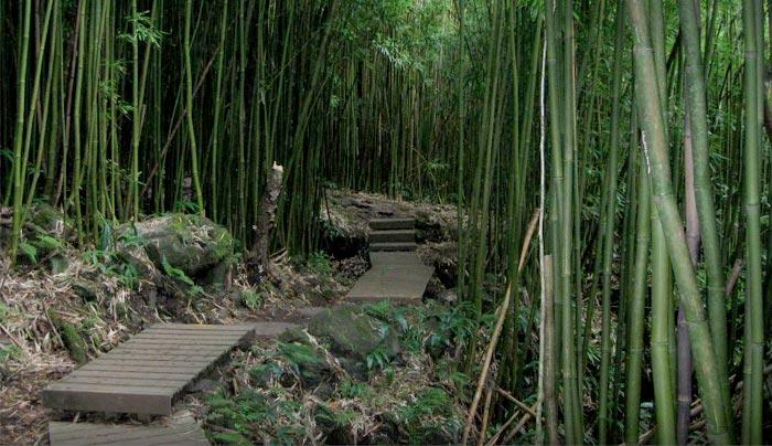 maui-hike_article