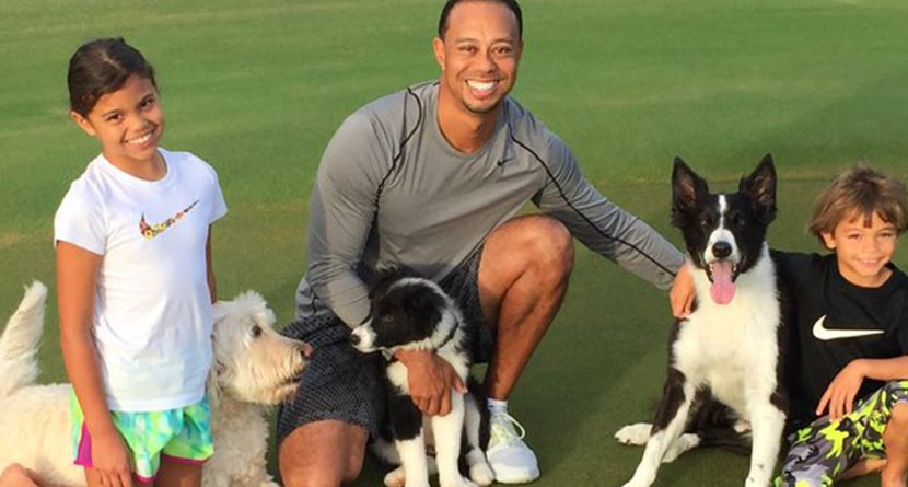 Tiger Woods Shares Pictures Of Family's New Dog, Bugs