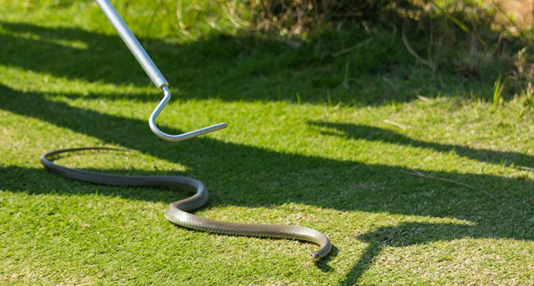 Watch: Snakes On Rio's Golf Course