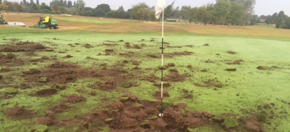 Vandals Show No Mercy For Golf Course