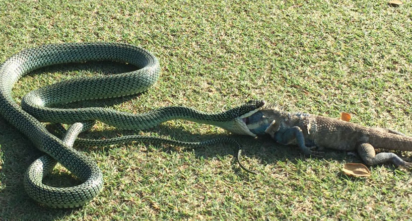 10 Snakes On The Golf Course