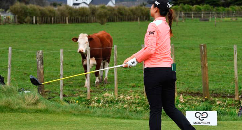 Charity Event Giving Away a Cow For an Ace