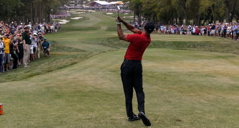 Are We Fighting Tiger Fatigue? Maybe Not