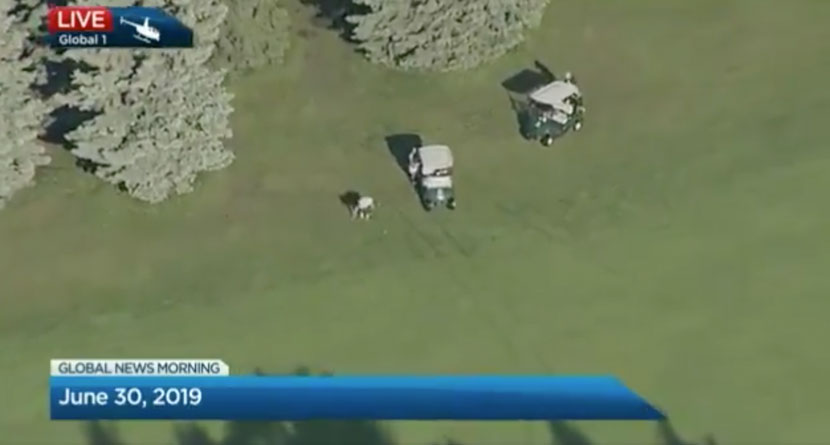 Golfer Caught Cheating By News Helicopter