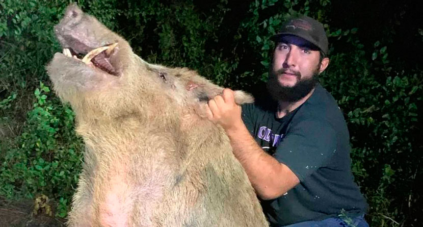 400-Pound Wild Boar Caught At Texas Golf Course