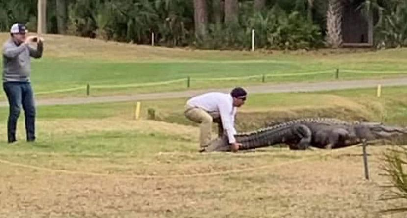 """Golfer At S.C. Resort Charged With """"Molesting An Alligator"""""""